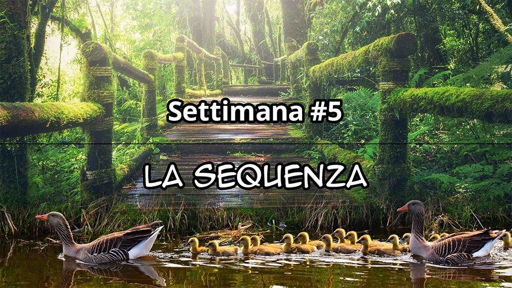 Settimana #5