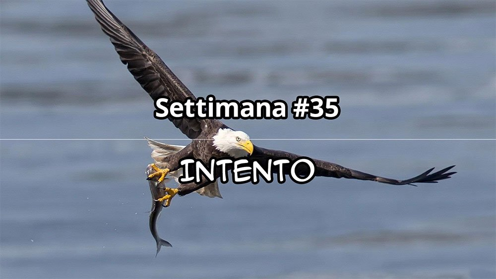 Settimana #35